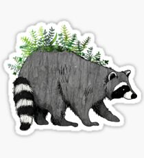 Fern Raccoon Sticker