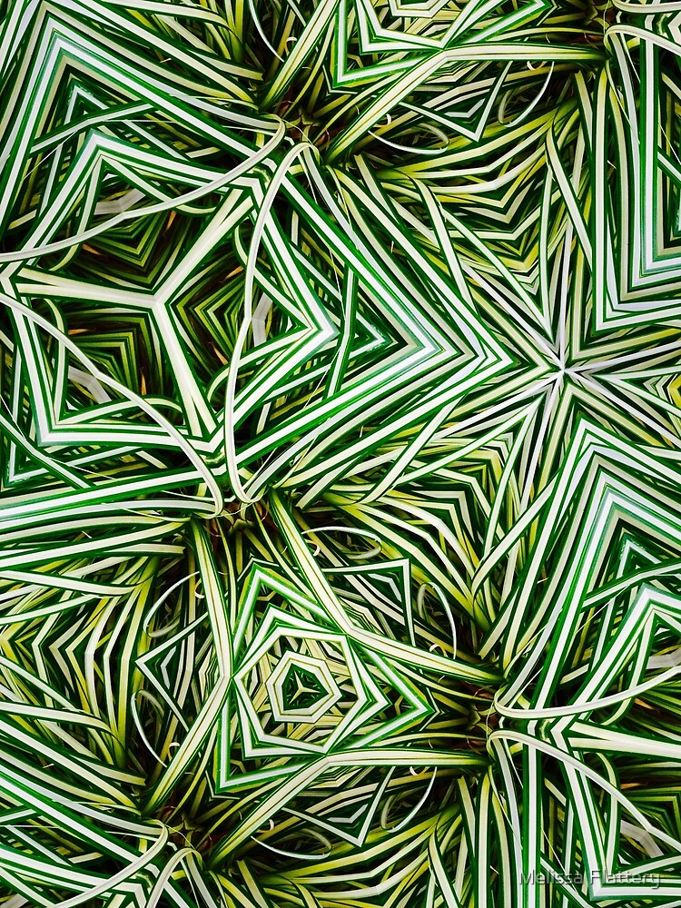 Grass, Ornamental by Melissa Flattery