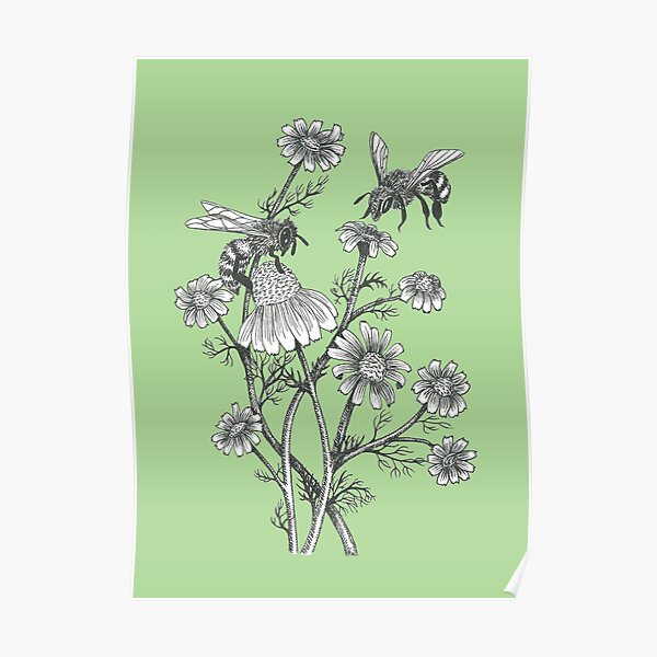 bees and chamomile on succulent green background Poster