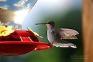 Hummingbird 4 by G. David Chafin