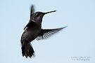 Hummingbird 6 by G. David Chafin