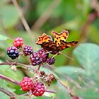 """"""" Comma-encing Autumn """" by Richard Couchman"""
