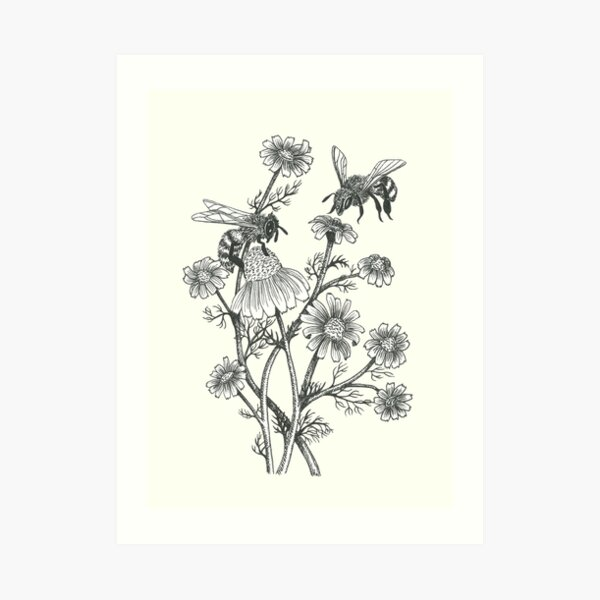 bees and chamomile on offwhite background Art Print