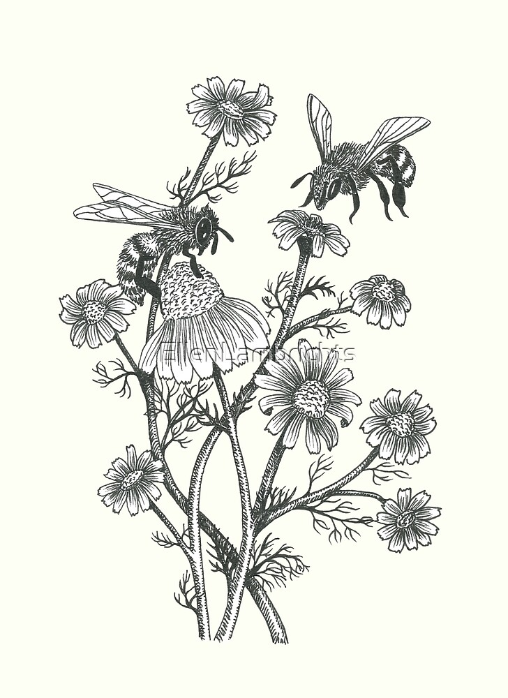 bees and chamomile on offwhite background by EllenLambrichts