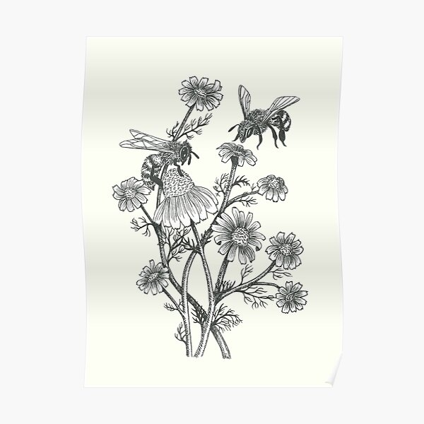 bees and chamomile on offwhite background Poster