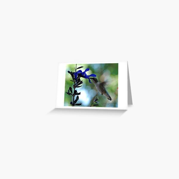 Hummingbird 9 Greeting Card