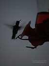 Ruby Throated Hummingbird Silhouette  by G. David Chafin