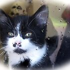 But Kitty it's Wet Outside............. Devon UK by lynn carter