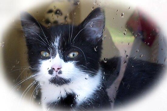But Kitty it's Wet Outside............. Devon UK by lynn carter