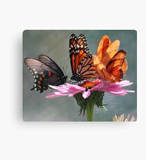 Butterfly Convention Canvas Print