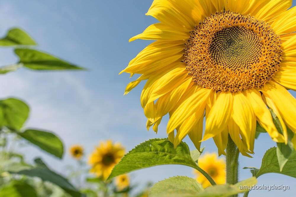 Soaking up the SunFlower by amydooleydesign