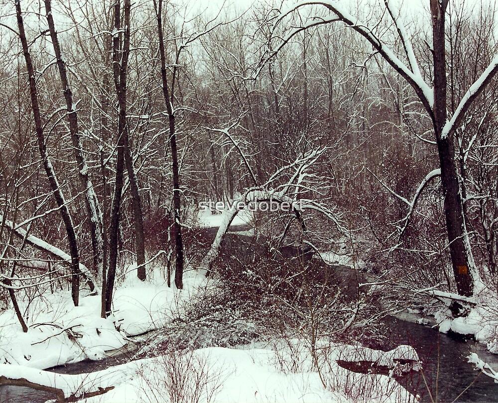 winter stream by stevedobert