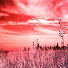 Prairie by Paula Bielnicka