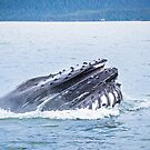 humpback whale hunting in alaska bay by ALEX GRICHENKO