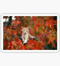 cat kitten autumn Sticker