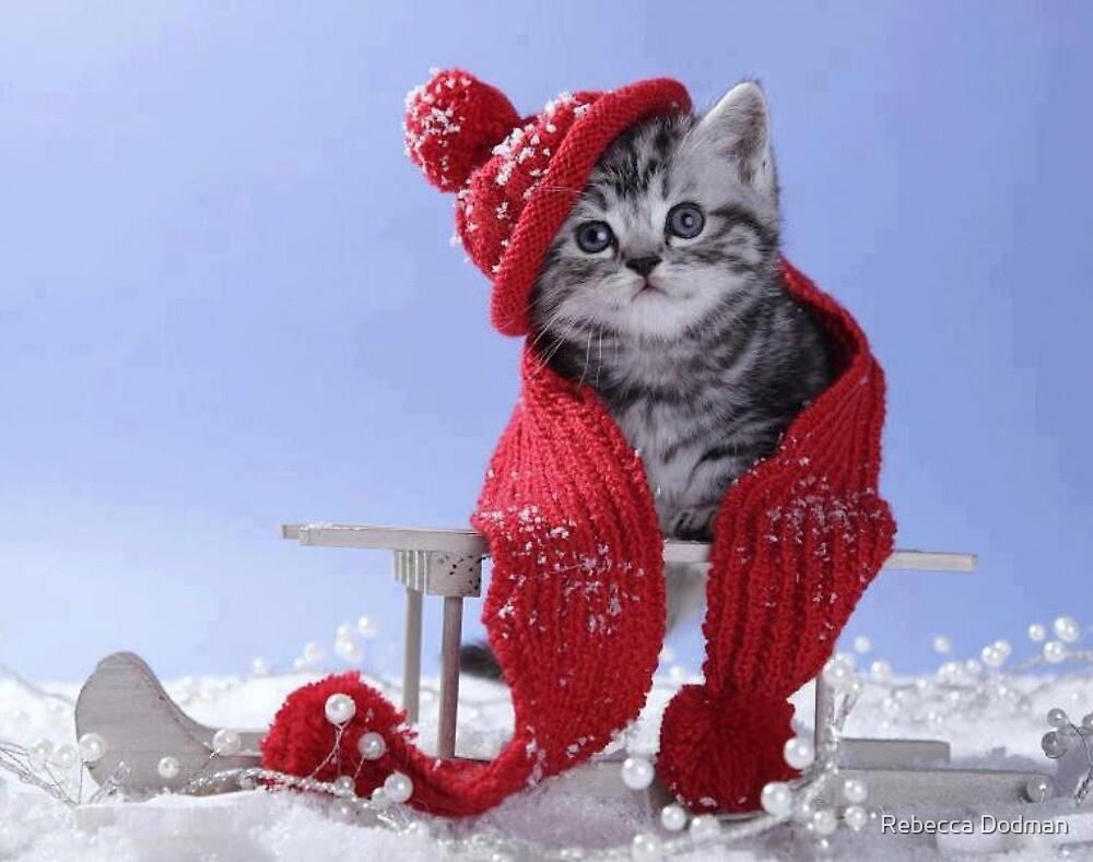 christmas cat! kitten by Rebecca Dodman