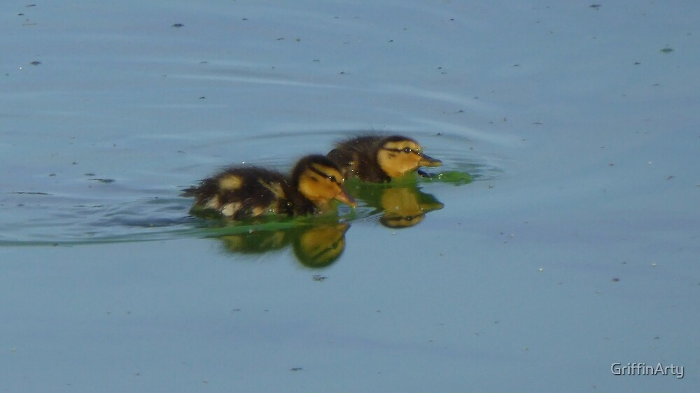 Twin Ducklings Swimming Reflections by GriffinArty