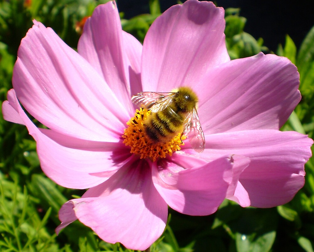 A bumble Bee and a flower! by Mary  Hazelton