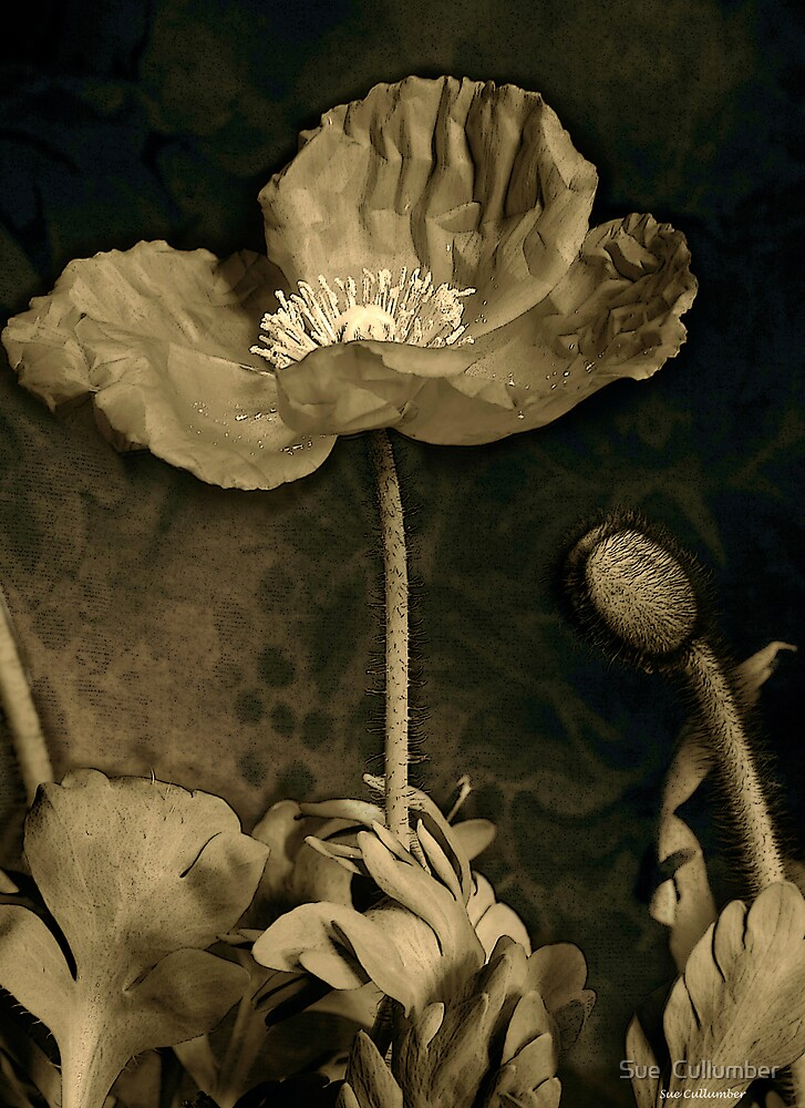 Poppy Tapestry by Sue  Cullumber