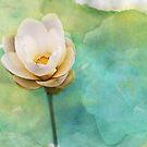 Pastel Lotus by Shawna Rowe