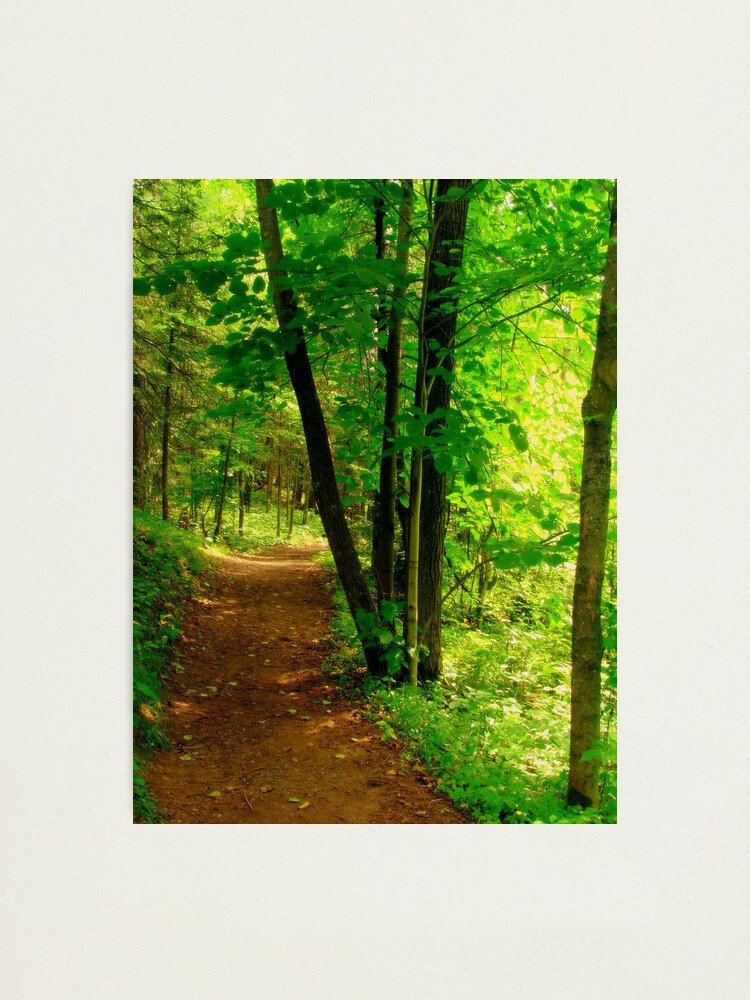 Alternate view of Your Path Photographic Print