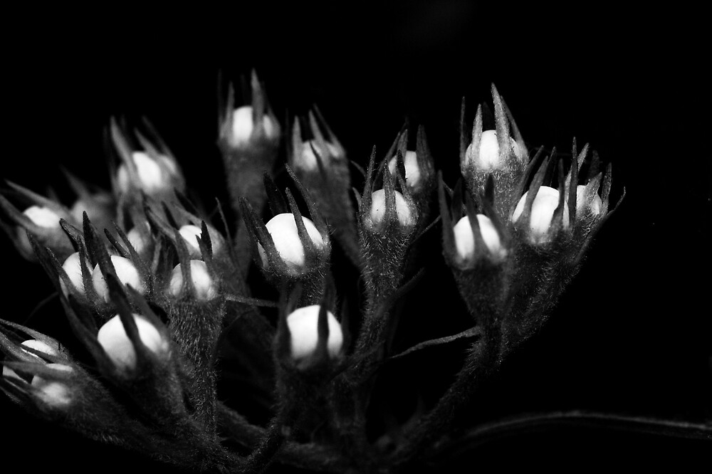 Local Flora - Grab by Ryan  Schoeneman