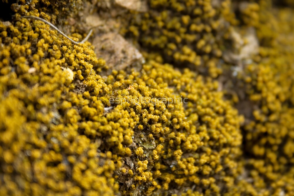 yellow moss. by esphotographic