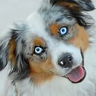 Blue-Eyed Dog by Laurie Minor