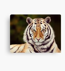 Tiger Leinwanddruck