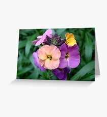 Wallflowers II Greeting Card