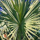 Plant by mwilliams9798