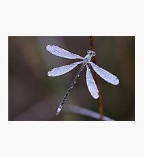 Jewel of Nature Photographic Print