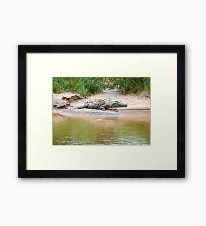 THE NILE CROCODILE - Crocodylus niloticus Framed Print