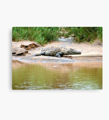 THE NILE CROCODILE - Crocodylus niloticus Canvas Print