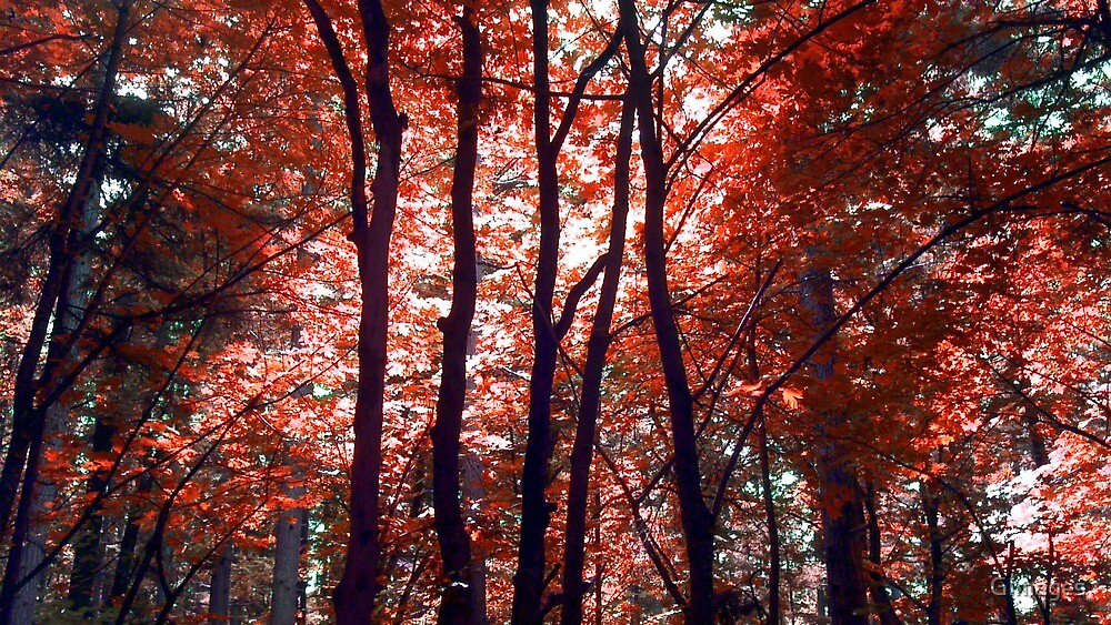 Red Forest by GImages
