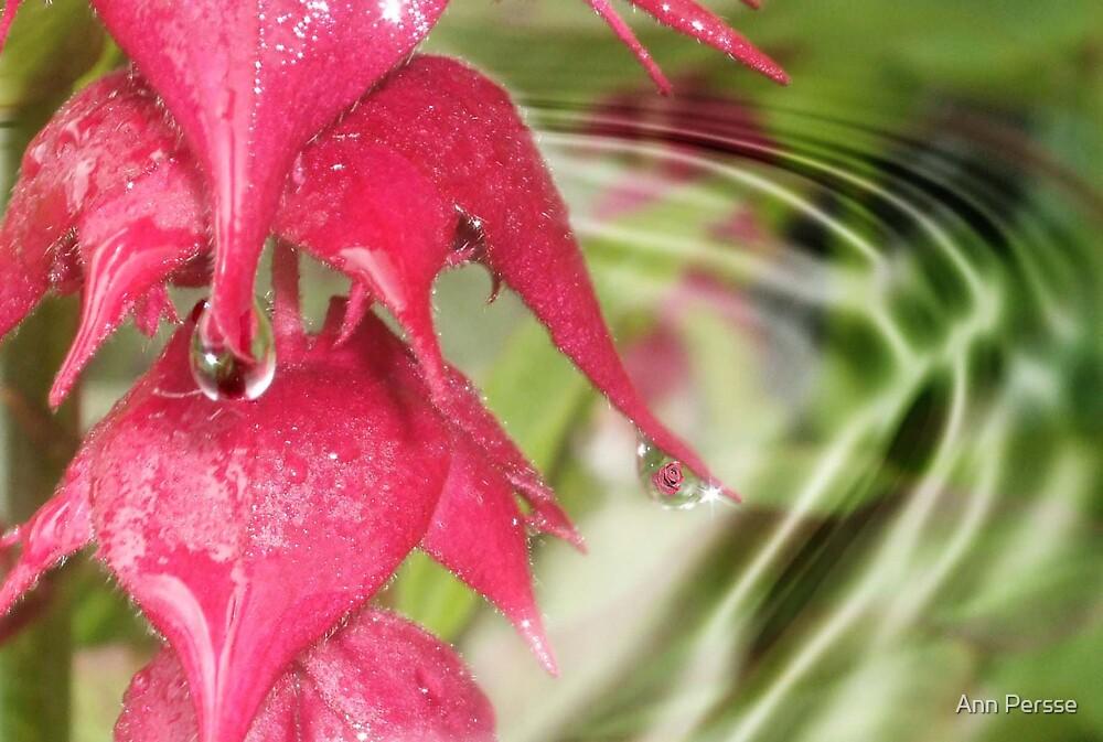 Fushia and rain drops by Ann Persse