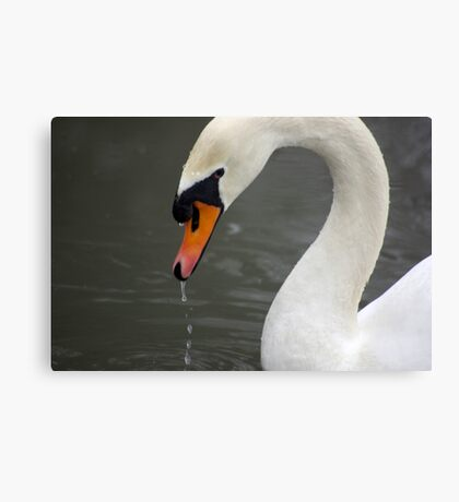 Excuse me dripping Canvas Print