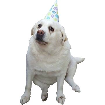 Birthday Dog by TomGBR