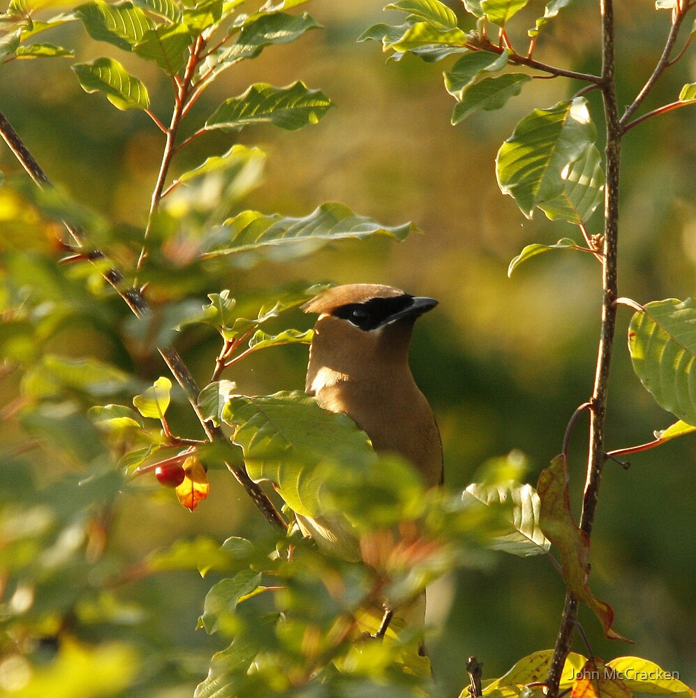 """Cedar Waxwing"" by John McCracken"
