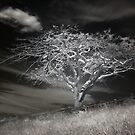 Tree and Cloud by Ben Ryan