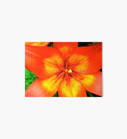 Orange Lily - all products Art Board