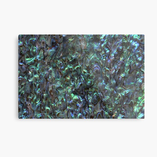Abalone Shell | Paua Shell | Seashell Patterns | Sea Shells | Natural |  Metal Print