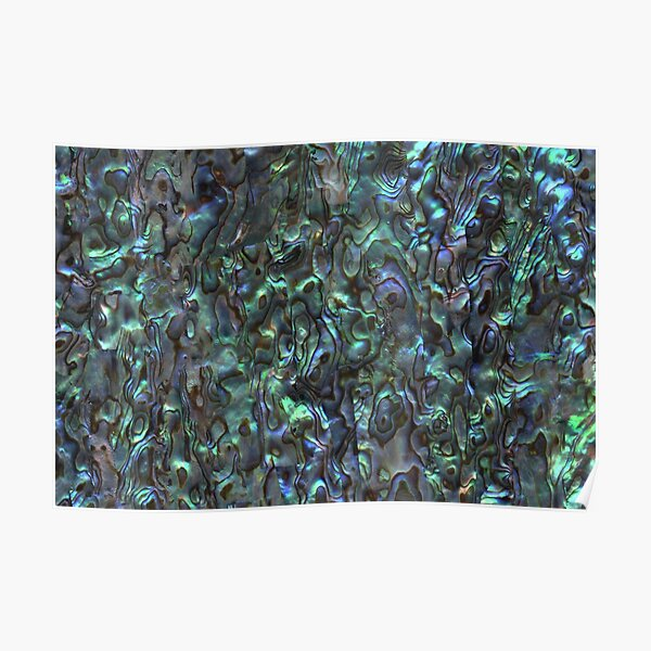 Abalone Shell | Paua Shell | Seashell Patterns | Sea Shells | Natural |  Poster