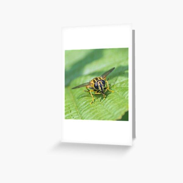 Sun Fly Greeting Card