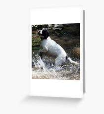 Dog in the wet Greeting Card