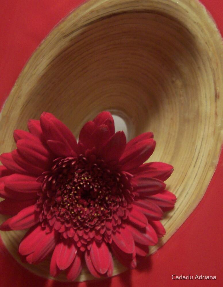 Duble Red by Cadariu Adriana