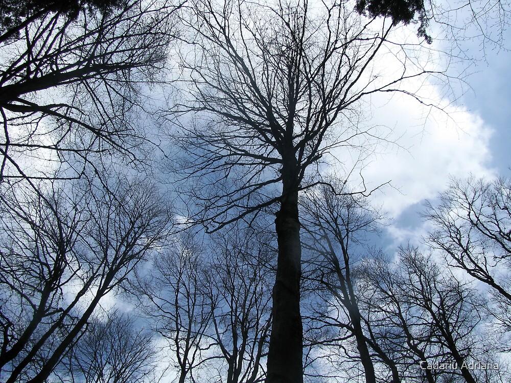 Dark Forest by Cadariu Adriana