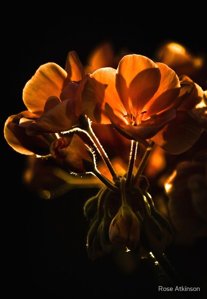 Golden light by Rose Atkinson