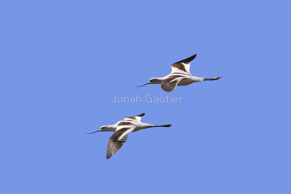 We fly together by Jonah Gautier