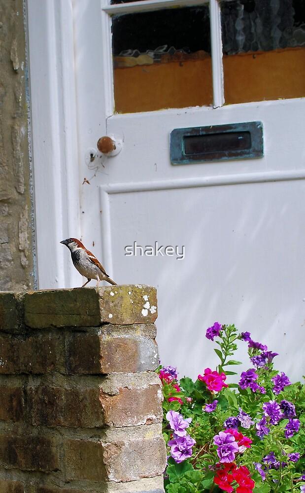 Sparrow by shakey